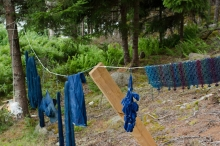 items on the clothesline before the forest