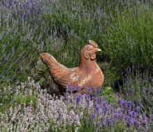 Lavender-2856