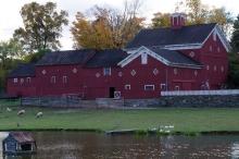 local sheep and barns