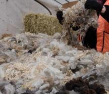 More gorgeous fleece