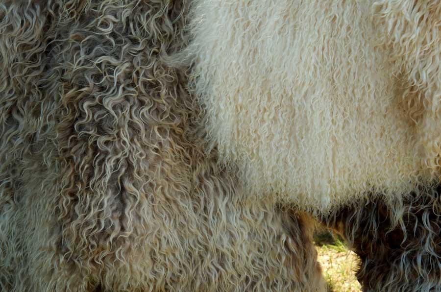 Friends Folly Farm Angora pelts